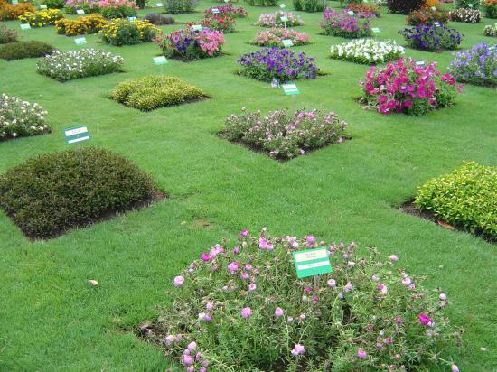 Nantes en images for Le jardin de plantes